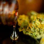 Recreational Marijuana Effort; Will He Do it Again?