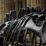 Thirteen Ton Dinosaur Discovered