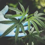Bill Legalizing Marijuana on Federal Level Approved by House of Representatives
